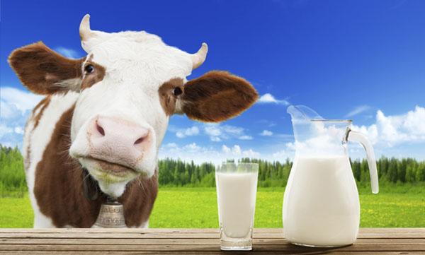Sữa tươi nguyên kem là gì?