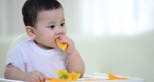Gợi ý thực đơn ăn dặm BLW cho bé 9 tháng tuổi