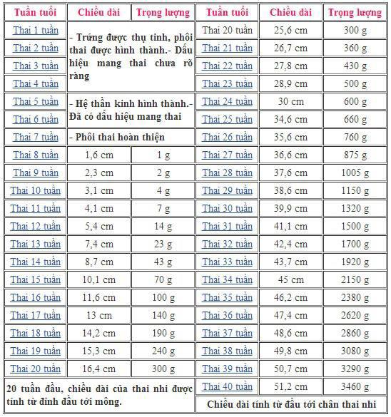 Bảng chỉ số chiều cao cân nặng thai nhi theo tuần tuổi