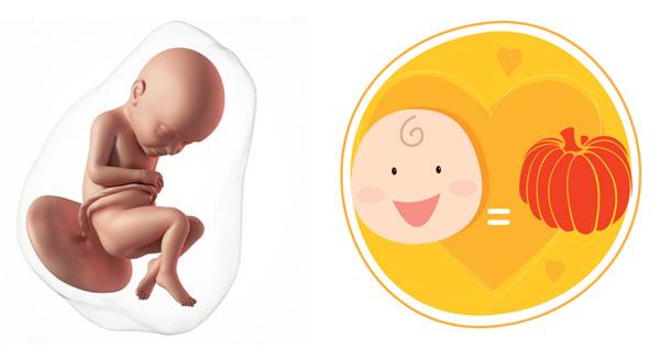 Sự phát triển của thai nhi 32 tuần tuổi