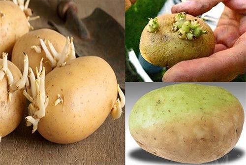 Bà bầu nên hạn chế ăn khoai tây, đặc biệt là khoai tây mọc mầm và khoai tây xanh