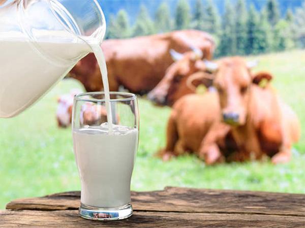 Sữa tiệt trùng/ thanh trùng giàu dinh dưỡng, tốt cho phụ nữ sau sinh
