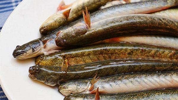 Cá kèo bổ sung DHA, protein, axit amin sẽ hỗ trợ trí não bé phát triển tốt