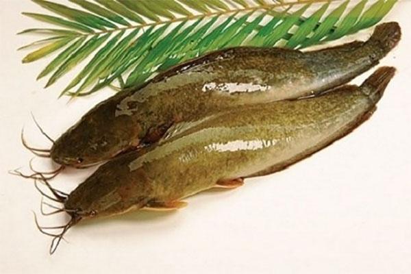 Cá trê giàu protein, vitamin B canxi và sắt...tốt cho bé ăn dặm